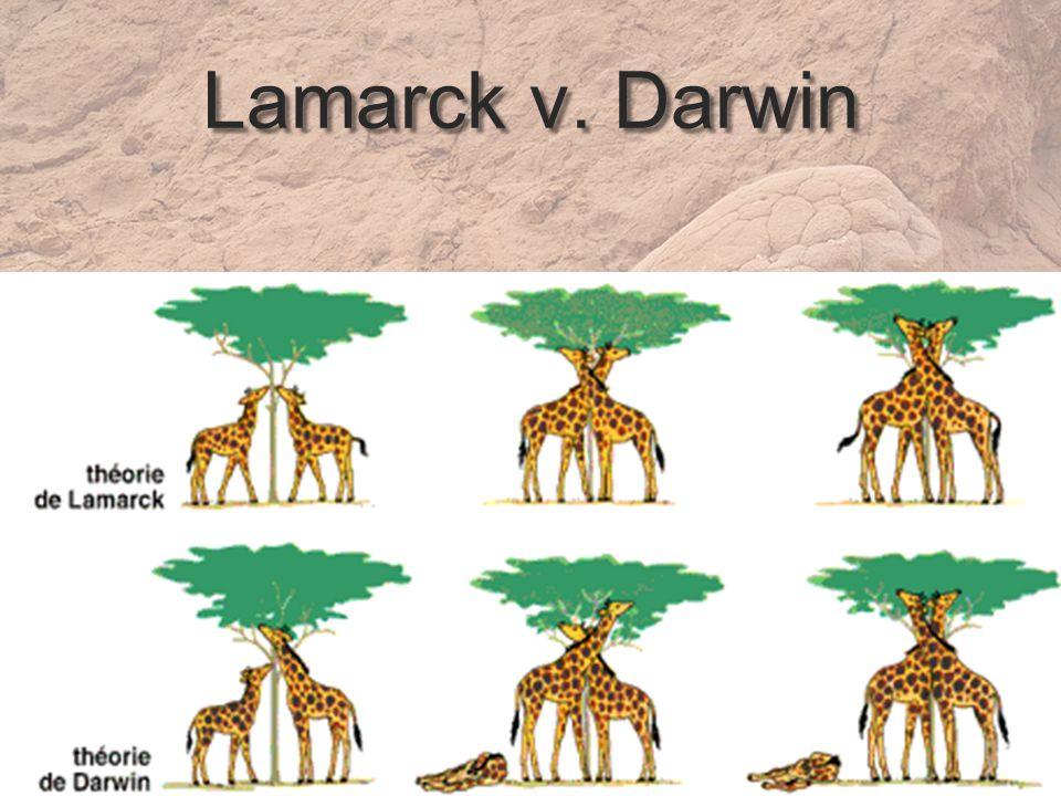 Lamarck v. Darwin