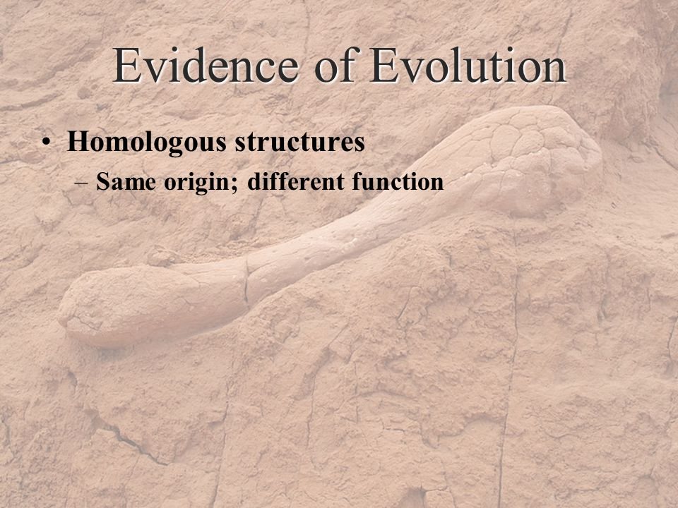 Evidence of Evolution Homologous structures –Same origin; different function