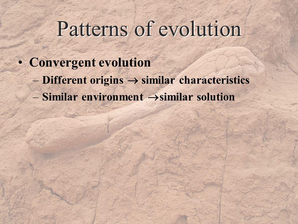 Patterns of evolution Convergent evolution –Different origins similar characteristics –Similar environment similar solution