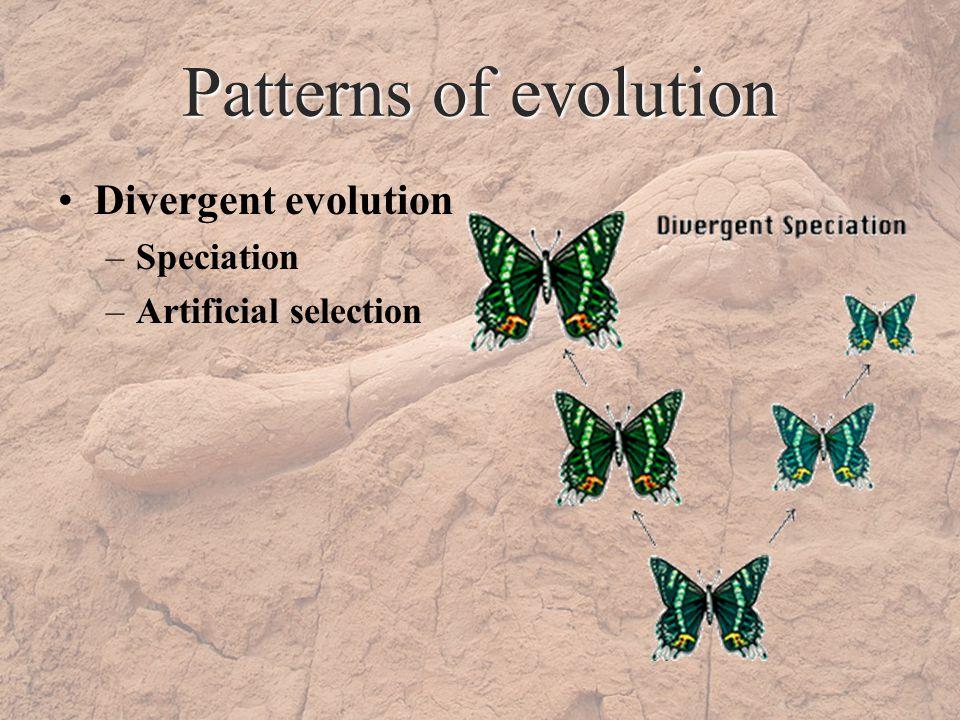 Patterns of evolution Divergent evolution –Speciation –Artificial selection