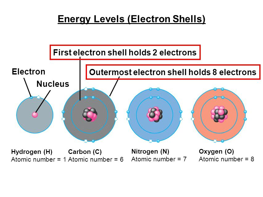 Energy Levels (Electron Shells) Hydrogen (H) Atomic number = 1 Carbon (C) Atomic number = 6 Nitrogen (N) Atomic number = 7 Oxygen (O) Atomic number = 8 Outermost electron shell holds 8 electrons First electron shell holds 2 electrons Electron Nucleus