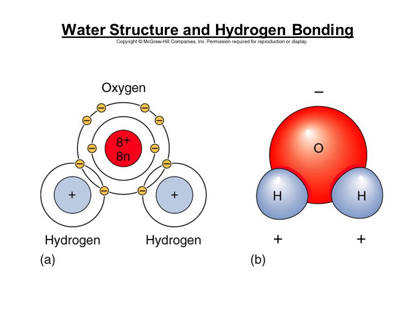Water Structure and Hydrogen Bonding