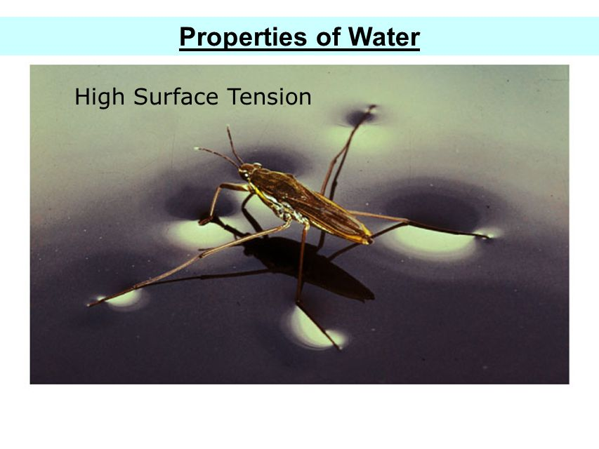 Properties of Water High Surface Tension