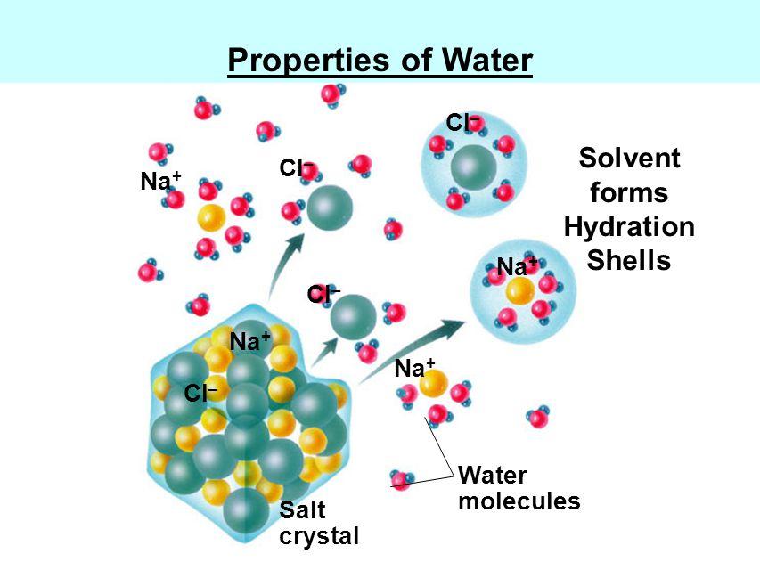 Water molecules Salt crystal Na + Cl – Na + Cl – Fig.