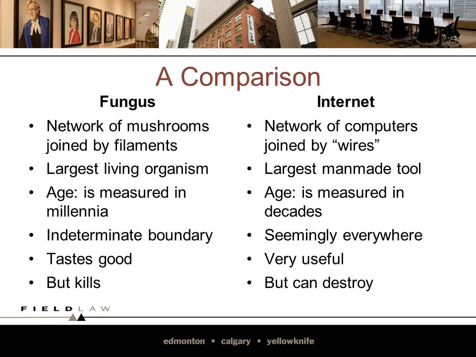 A Comparison Fungus Network of mushrooms joined by filaments Largest living organism Age: is measured in millennia Indeterminate boundary Tastes good But kills Internet Network of computers joined by wires Largest manmade tool Age: is measured in decades Seemingly everywhere Very useful But can destroy 7