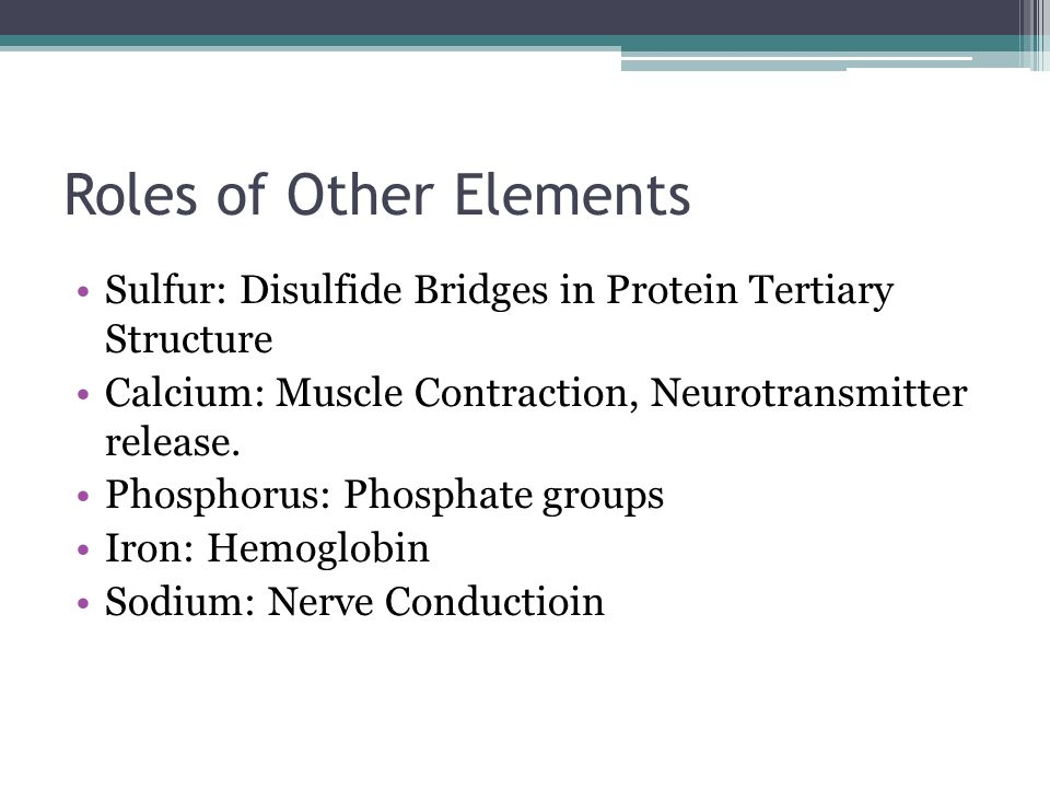 Roles of Other Elements Sulfur: Disulfide Bridges in Protein Tertiary Structure Calcium: Muscle Contraction, Neurotransmitter release. Phosphorus: Pho
