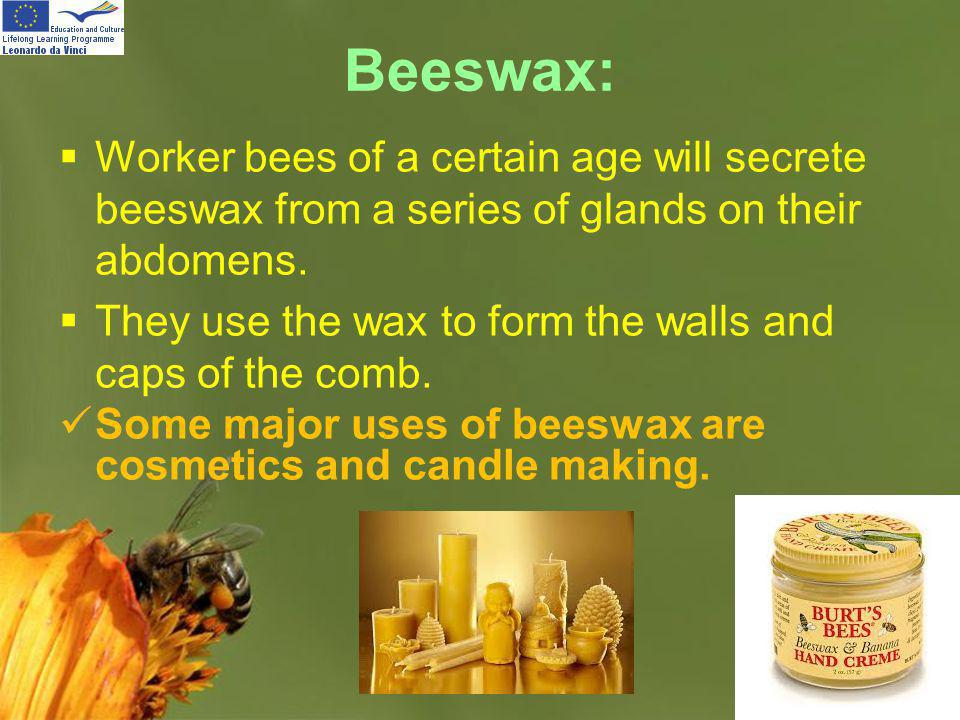 Page 17 Beeswax: Worker bees of a certain age will secrete beeswax from a series of glands on their abdomens. They use the wax to form the walls and c