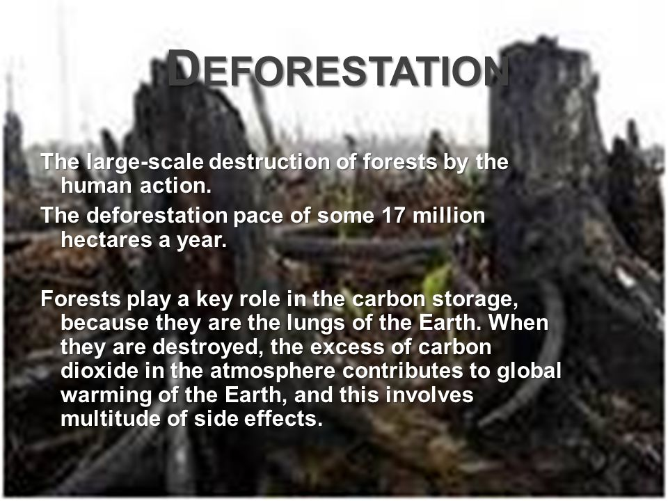 D EFORESTATION D EFORESTATION The large-scale destruction of forests by the human action.