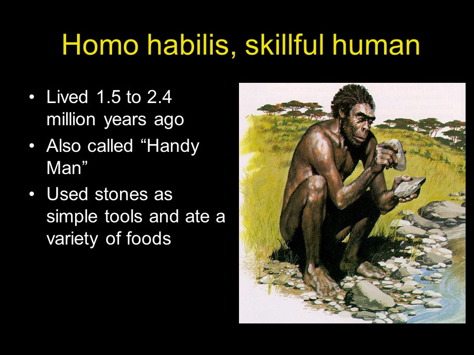 Homo Erectus, upright human Lived 300,000 to 1.6 million years ago Used fire Made stone axes and chopping tools