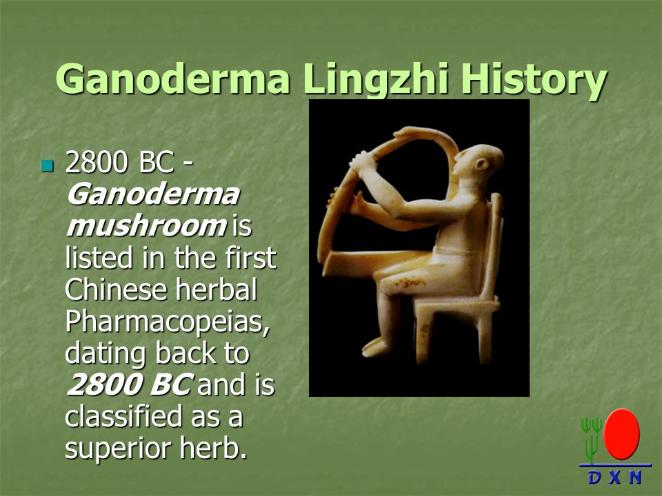 Ganoderma Lingzhi History 2800 BC - Ganoderma mushroom is listed in the first Chinese herbal Pharmacopeias, dating back to 2800 BC and is classified as a superior herb.