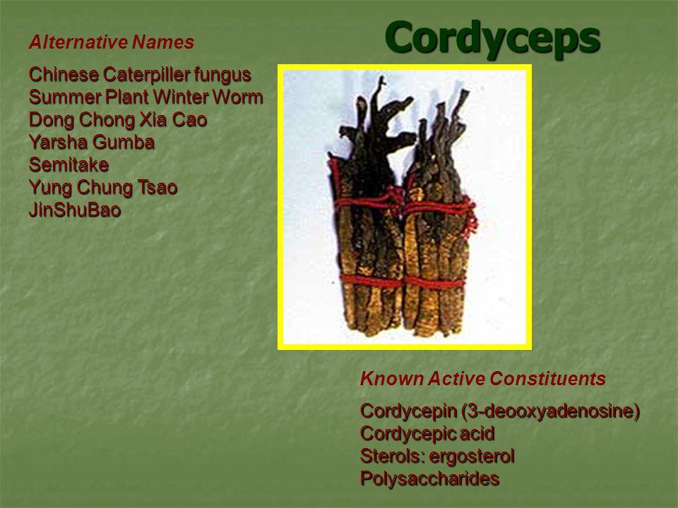 Cordyceps Alternative Names Chinese Caterpiller fungus Summer Plant Winter Worm Dong Chong Xia Cao Yarsha Gumba Semitake Yung Chung Tsao JinShuBao Known Active Constituents Cordycepin (3-deooxyadenosine) Cordycepic acid Sterols: ergosterol Polysaccharides