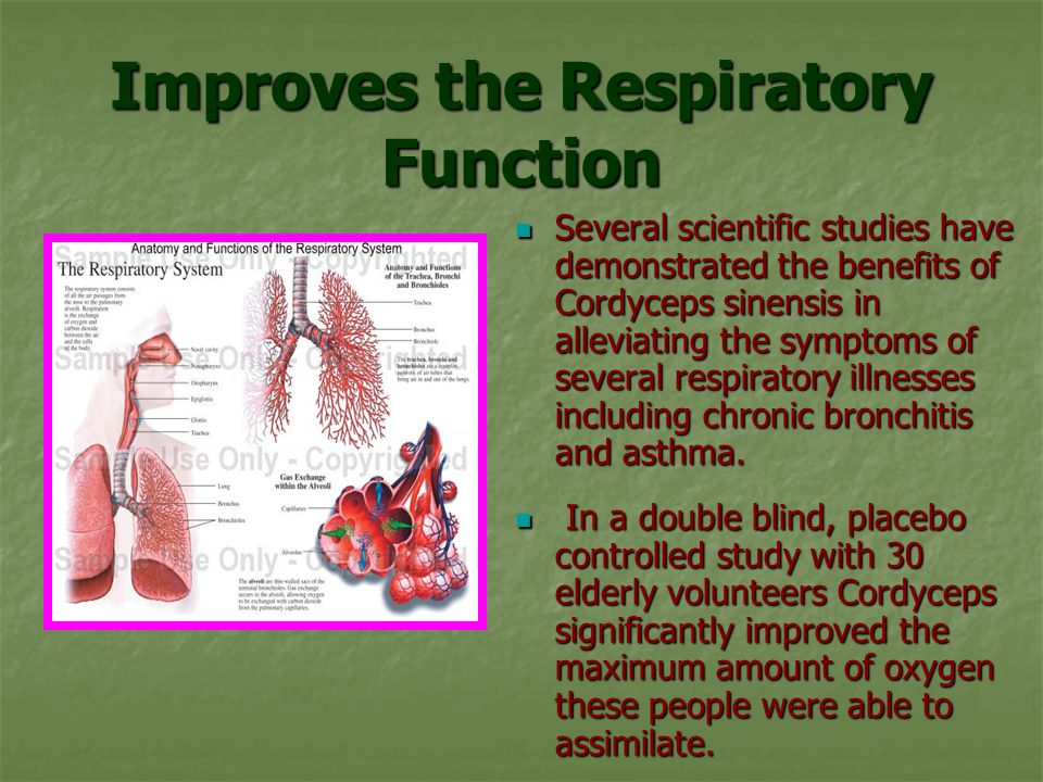 Improves the Respiratory Function Several scientific studies have demonstrated the benefits of Cordyceps sinensis in alleviating the symptoms of several respiratory illnesses including chronic bronchitis and asthma.