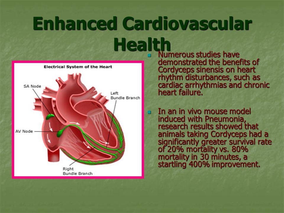 Enhanced Cardiovascular Health Numerous studies have demonstrated the benefits of Cordyceps sinensis on heart rhythm disturbances, such as cardiac arrhythmias and chronic heart failure.