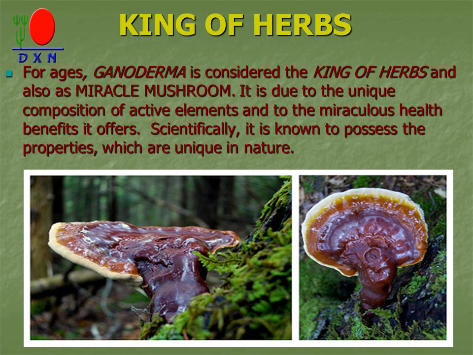 KING OF HERBS For ages, GANODERMA is considered the KING OF HERBS and also as MIRACLE MUSHROOM. It is due to the unique composition of active elements