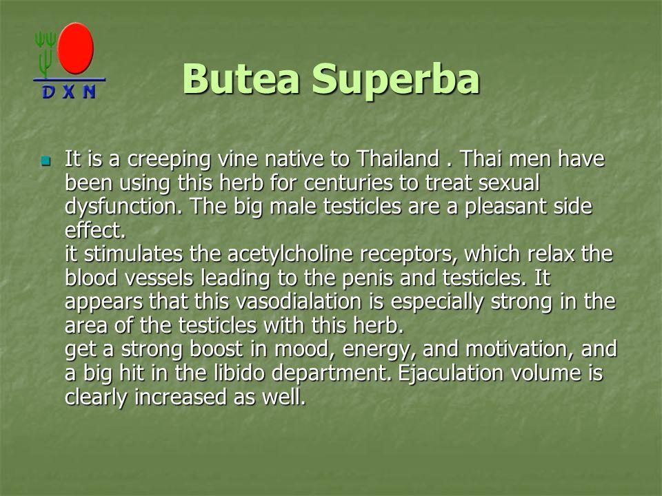 Butea Superba It is a creeping vine native to Thailand.