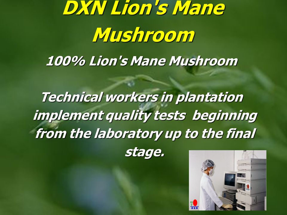 DXN Lion s Mane Mushroom 100% Lion s Mane Mushroom Technical workers in plantation implement quality tests beginning from the laboratory up to the final stage.