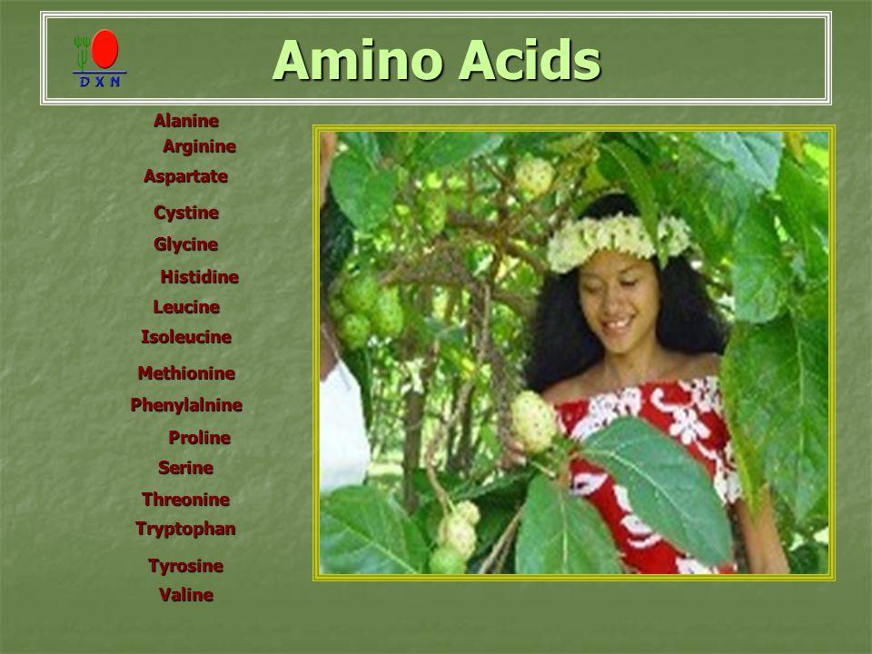 Amino Acids Alanine Arginine AspartateCystine Glycine Histidine LeucineIsoleucineMethionine Phenylalnine Proline SerineThreonineTryptophanTyrosineValine