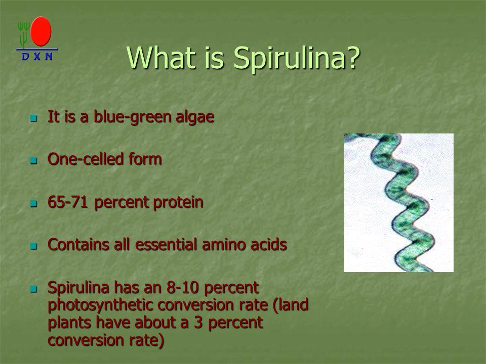 What is Spirulina? It is a blue-green algae It is a blue-green algae One-celled form One-celled form 65-71 percent protein 65-71 percent protein Conta