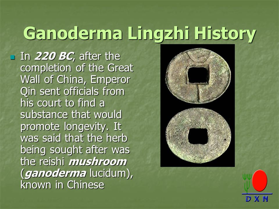 Ganoderma Lingzhi History In 220 BC, after the completion of the Great Wall of China, Emperor Qin sent officials from his court to find a substance that would promote longevity.