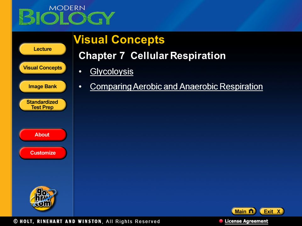 Visual Concepts Chapter 7 Cellular Respiration Glycoloysis Comparing Aerobic and Anaerobic Respiration