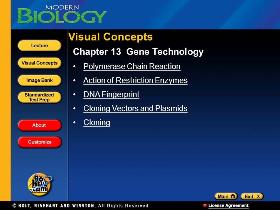 Visual Concepts Chapter 13 Gene Technology Polymerase Chain Reaction Action of Restriction Enzymes DNA Fingerprint Cloning Vectors and Plasmids Clonin