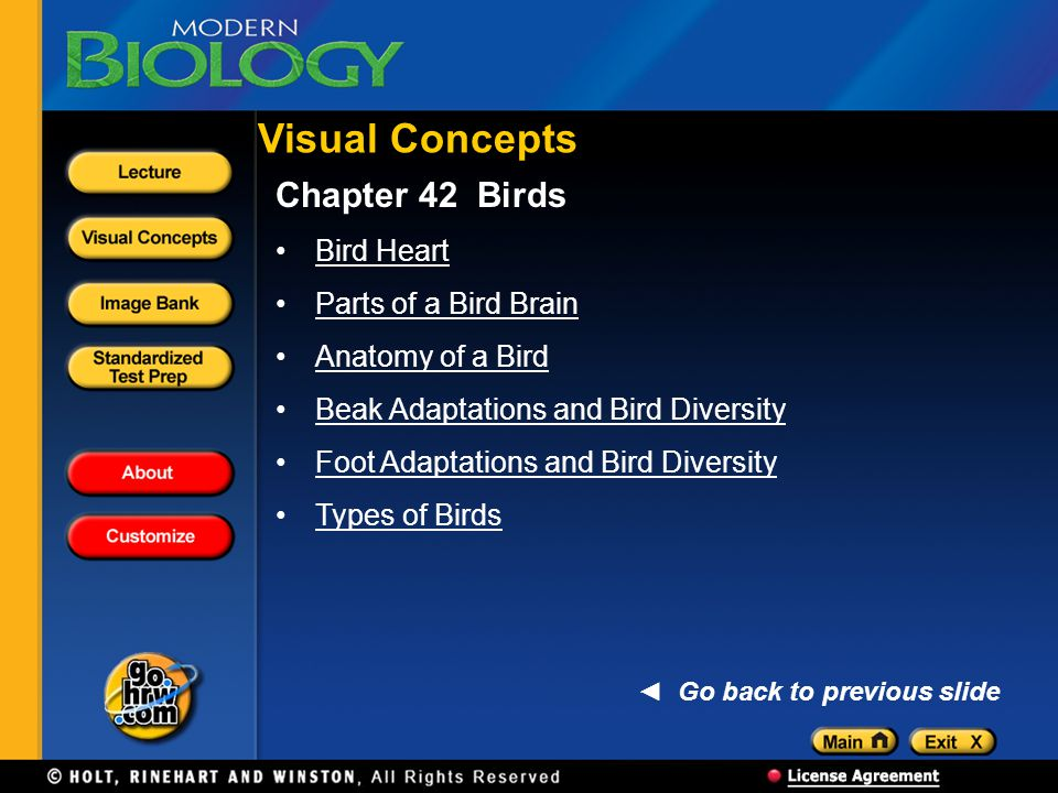 Chapter 42 Birds Bird Heart Parts of a Bird Brain Anatomy of a Bird Beak Adaptations and Bird Diversity Foot Adaptations and Bird Diversity Types of B