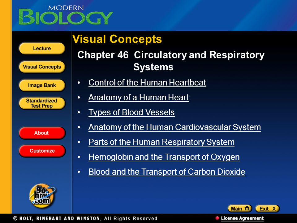 Chapter 46 Circulatory and Respiratory Systems Control of the Human Heartbeat Anatomy of a Human Heart Types of Blood Vessels Anatomy of the Human Car