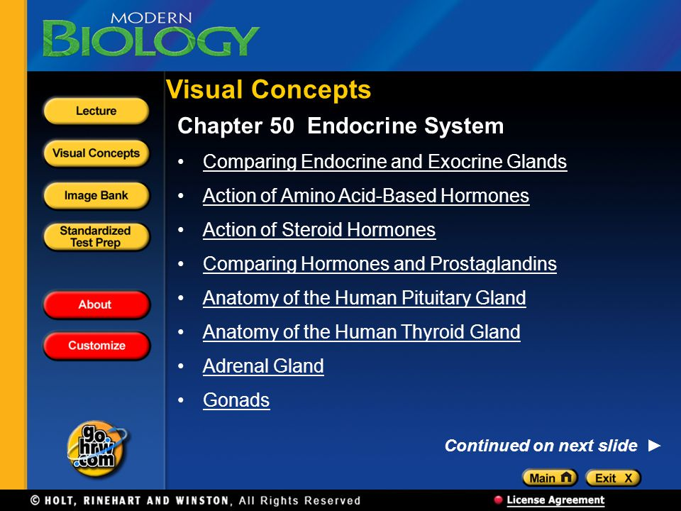 Chapter 50 Endocrine System Comparing Endocrine and Exocrine Glands Action of Amino Acid-Based Hormones Action of Steroid Hormones Comparing Hormones and Prostaglandins Anatomy of the Human Pituitary Gland Anatomy of the Human Thyroid Gland Adrenal Gland Gonads Visual Concepts Continued on next slide