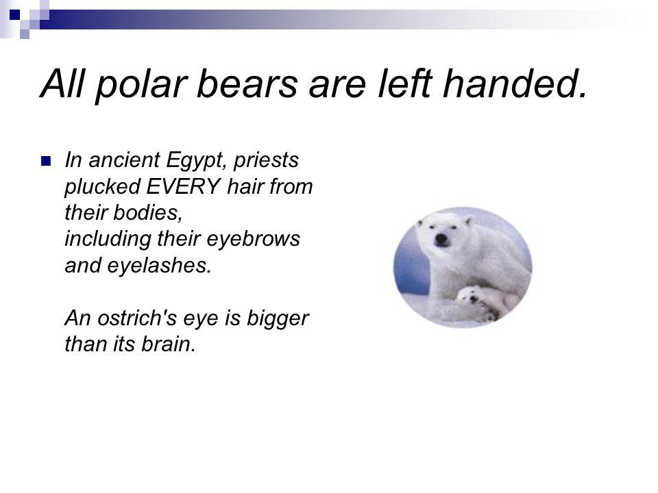 All polar bears are left handed.