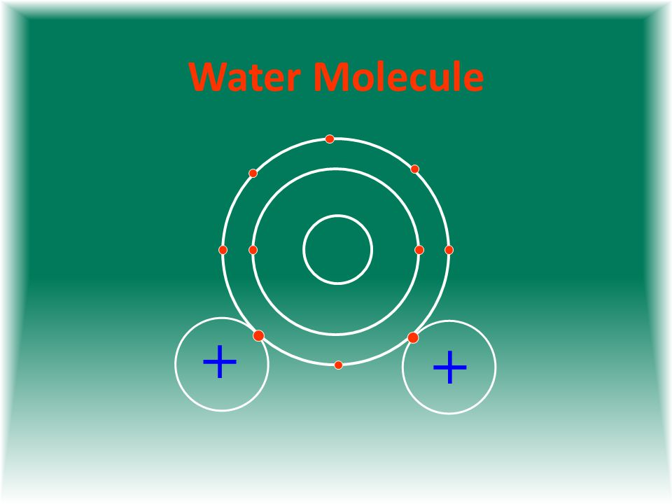 Water Molecule + +