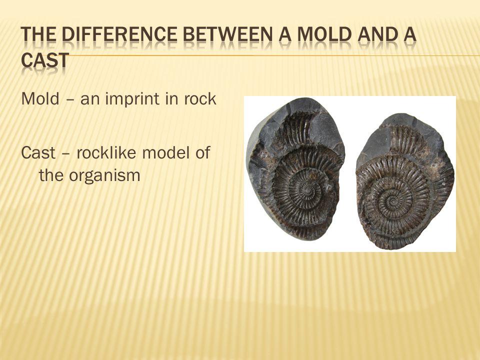The Paleozoic era began when the Precambrian era ended.