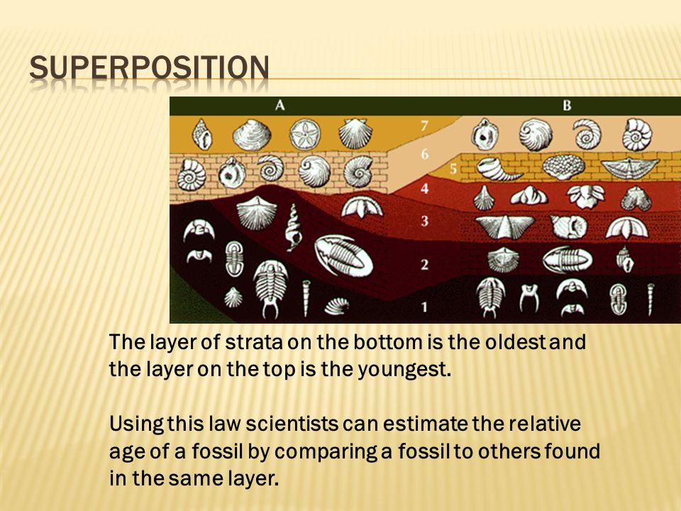 Pleistocene (2 mya to 10,000 years ago - The Rise of Man) Holocene (10,000 years ago to present - Modern Man)