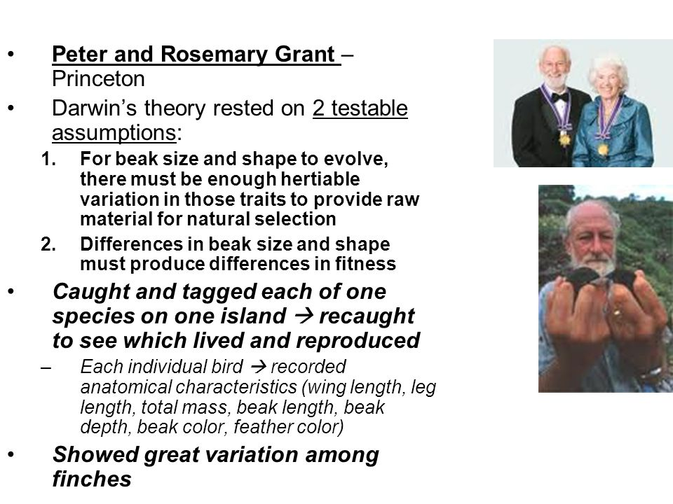 Peter and Rosemary Grant – Princeton Darwins theory rested on 2 testable assumptions: 1.For beak size and shape to evolve, there must be enough hertia