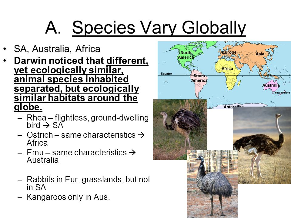 A. Species Vary Globally SA, Australia, Africa Darwin noticed that different, yet ecologically similar, animal species inhabited separated, but ecolog