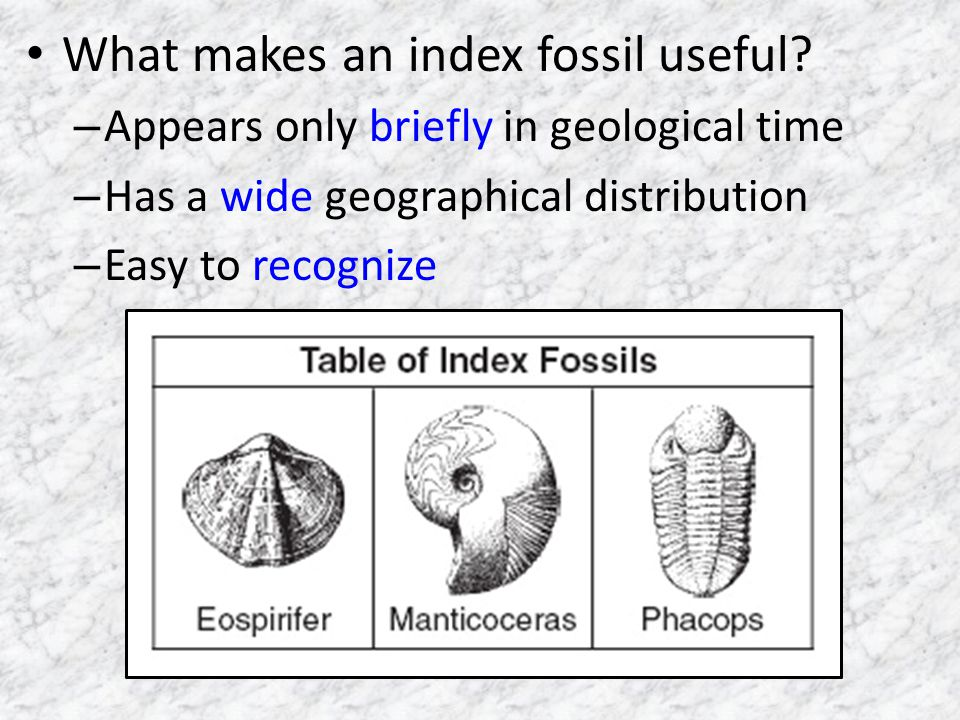 What makes an index fossil useful.