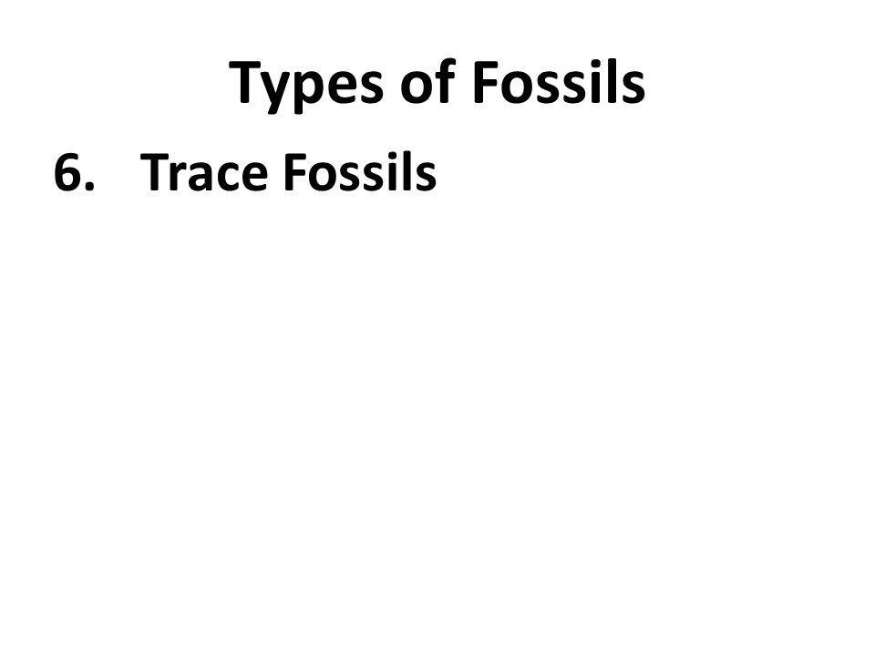 Types of Fossils 6.Trace Fossils