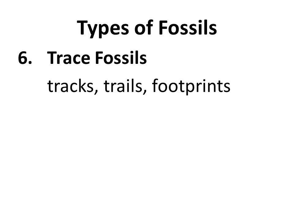 Types of Fossils 6.Trace Fossils tracks, trails, footprints