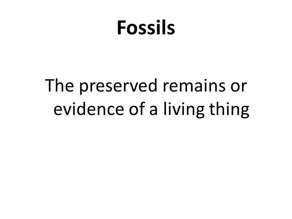 Fossils The preserved remains or evidence of a living thing