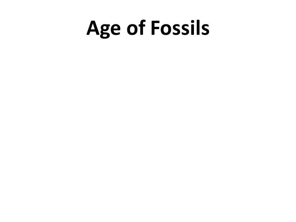 Age of Fossils
