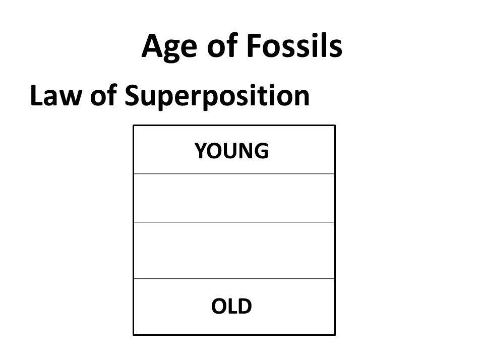 Age of Fossils Law of Superposition YOUNG OLD