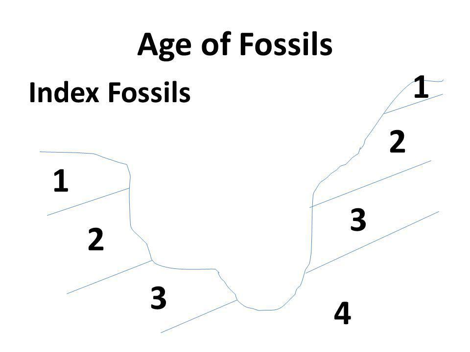 Age of Fossils Index Fossils