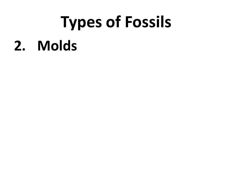 Types of Fossils 2.Molds