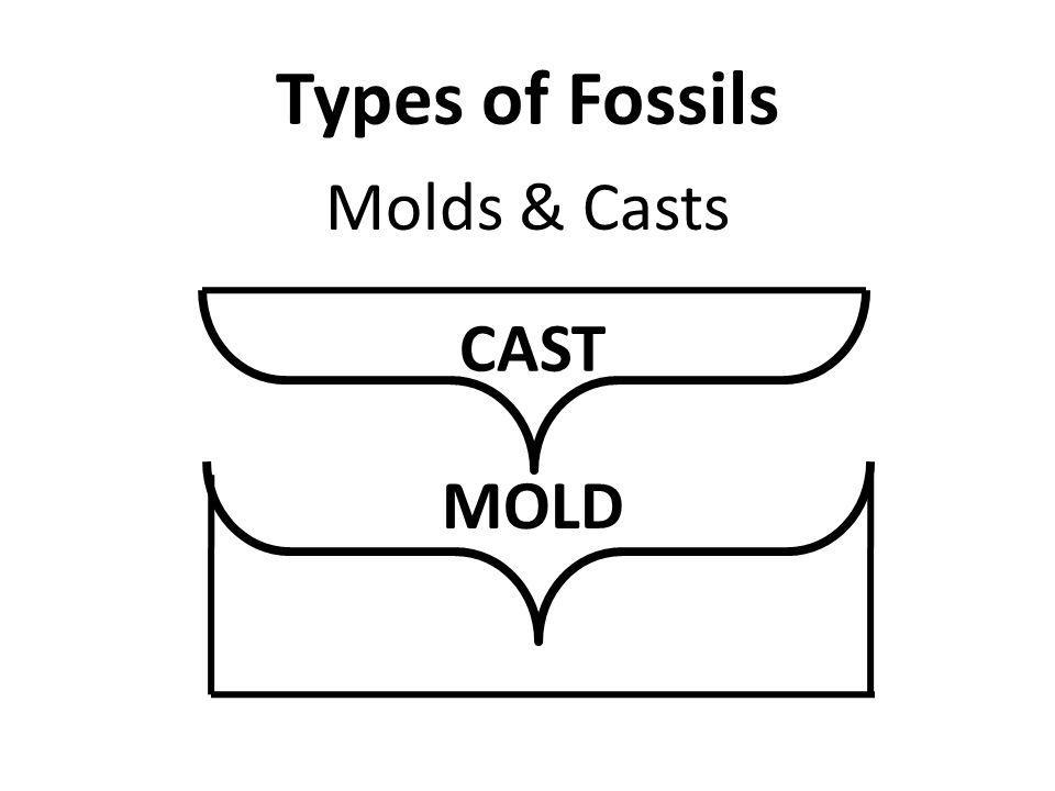 Types of Fossils Molds & Casts CAST MOLD