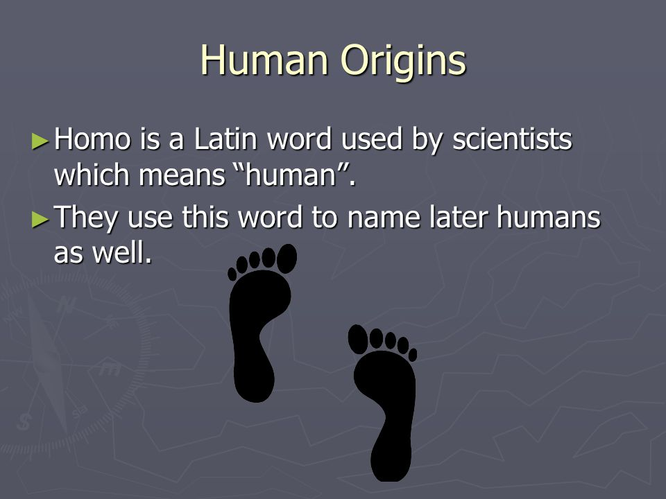Human Origins Homo is a Latin word used by scientists which means human. Homo is a Latin word used by scientists which means human. They use this word