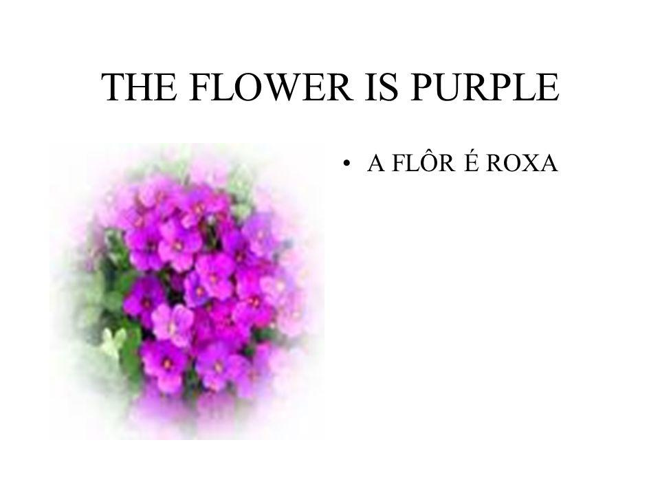 THE FLOWER IS PURPLE A FLÔR É ROXA
