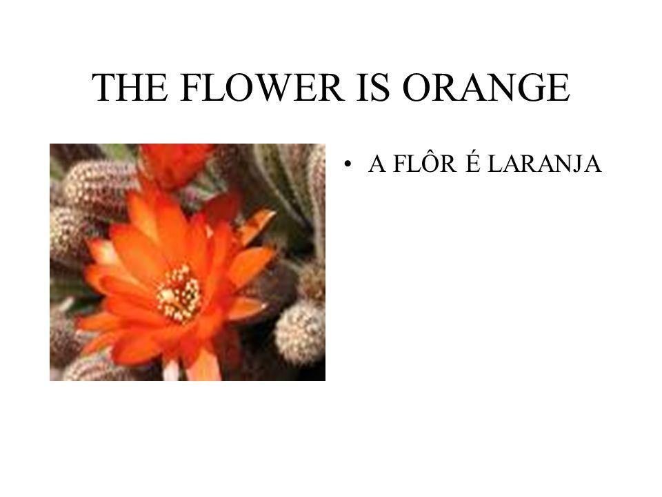 THE FLOWER IS ORANGE A FLÔR É LARANJA