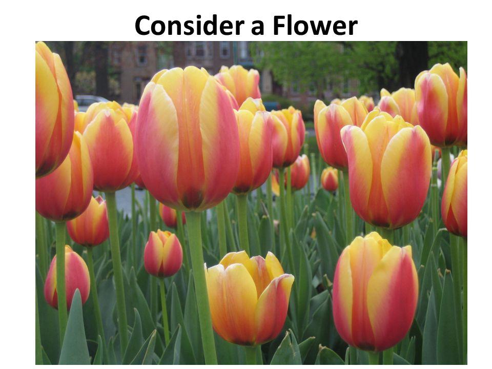 Consider a Flower