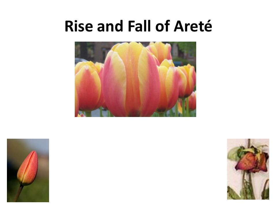 Rise and Fall of Areté