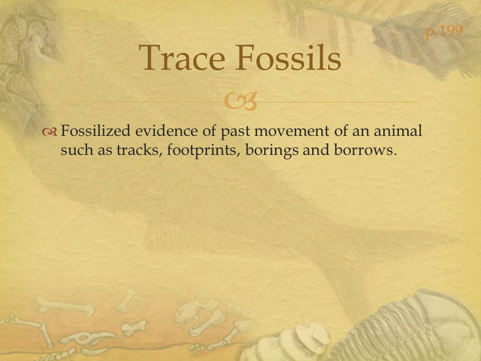 Trace Fossils Fossilized evidence of past movement of an animal such as tracks, footprints, borings and borrows. p.199