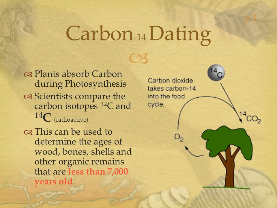 Carbon -14 Dating Plants absorb Carbon during Photosynthesis Scientists compare the carbon isotopes 12 C and 14 C (radioactive) This can be used to de